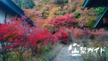 【紅葉スポット】天目山栖雲寺に行って感じた2つの見どころ