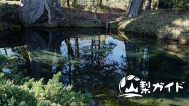 忍野八海を巡礼♪8つの池にある龍神とご利益を紹介【パワースポット】