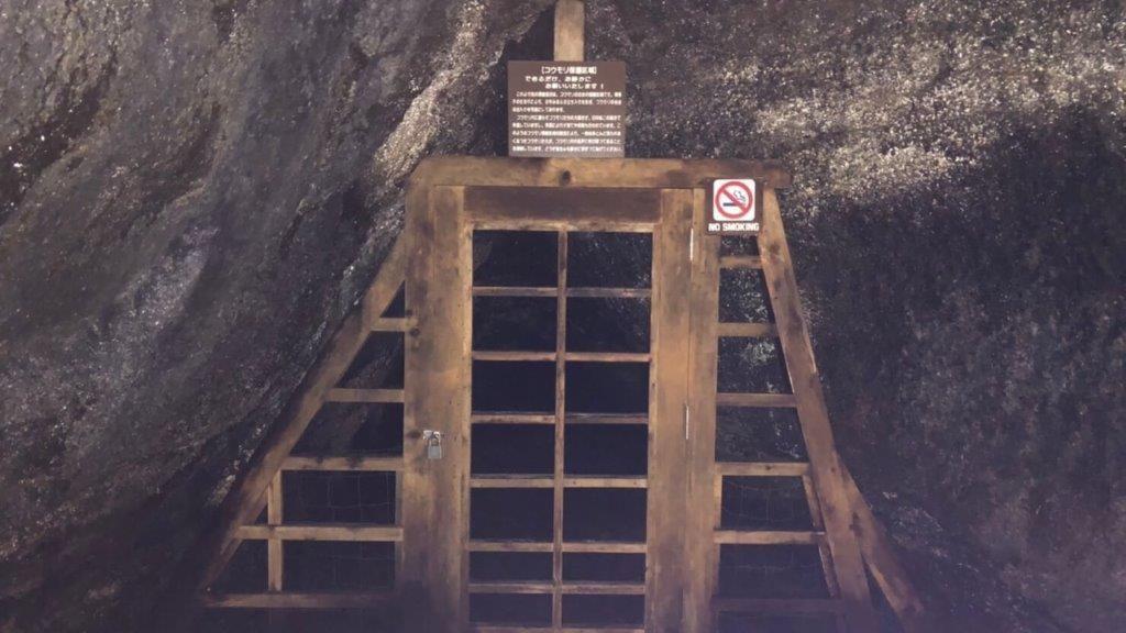 西湖コウモリ穴