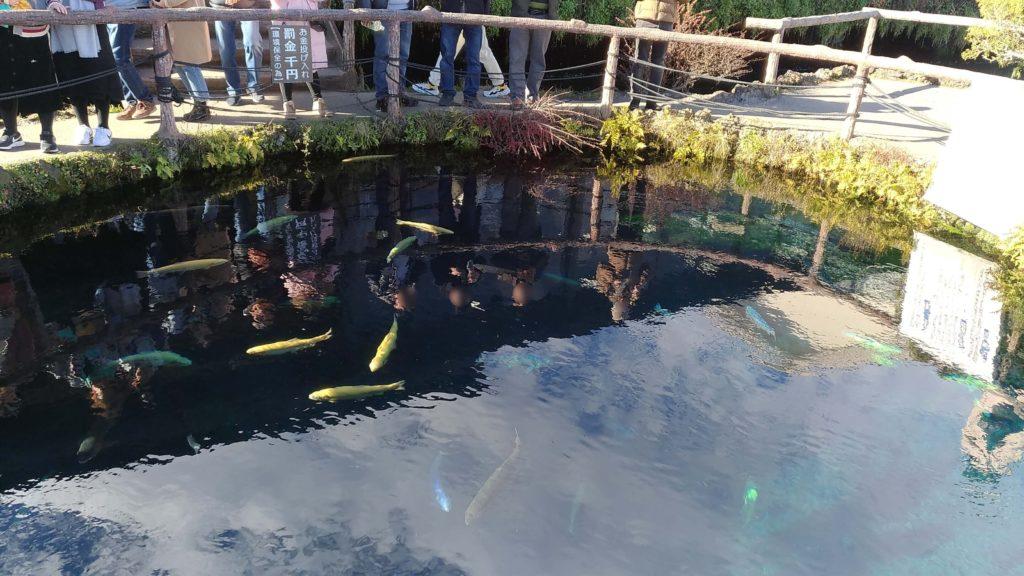 忍野八海,モデルコース,美しい湧水池