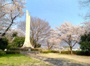 万力公園,桜,