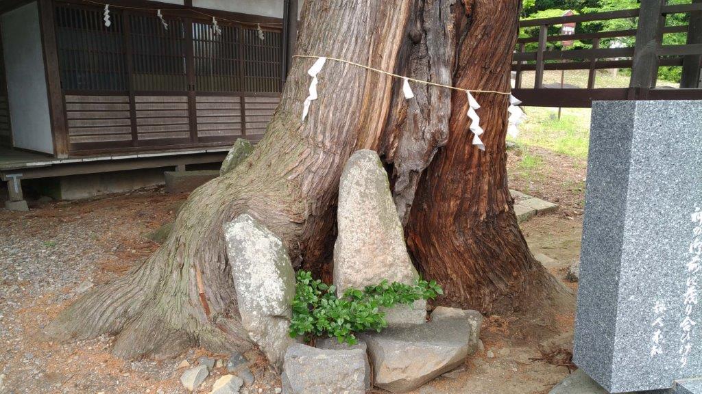 山梨岡神社,石碑を巻き込んだ御神木