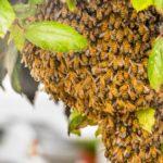 山梨県,ハチの巣駆除