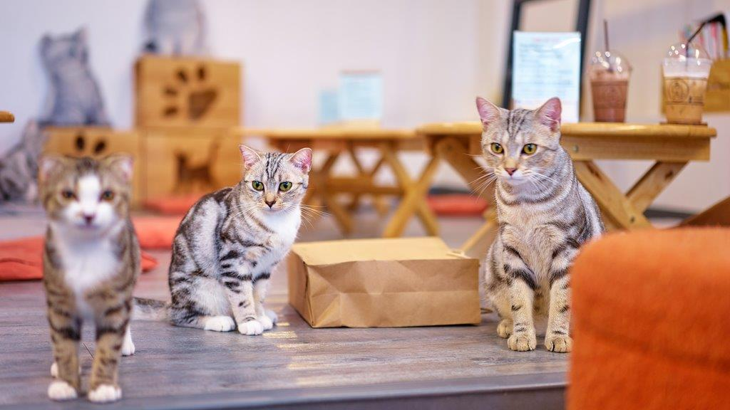 山梨県,猫カフェ