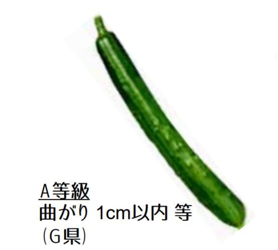 規格外野菜,きゅうり,